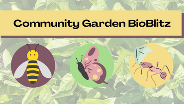 Image of various critters that you may find in a garden, with the text 'Garden Bioblitz'