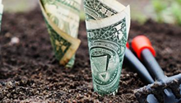 Dollar bills growing in soil