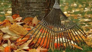 rake leaned against a tree with fall leaves on the ground