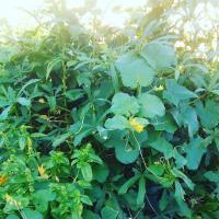 full plot of greenery