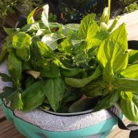 helmet full of herbs