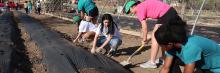 students volunteering in garden