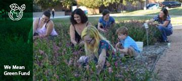 Natural Dye Garden Advancement
