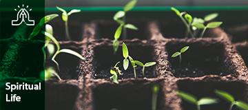 Spiritual life gardening