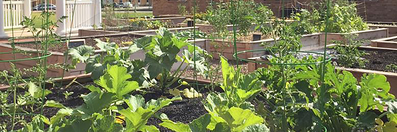 Sustainability Community Garden
