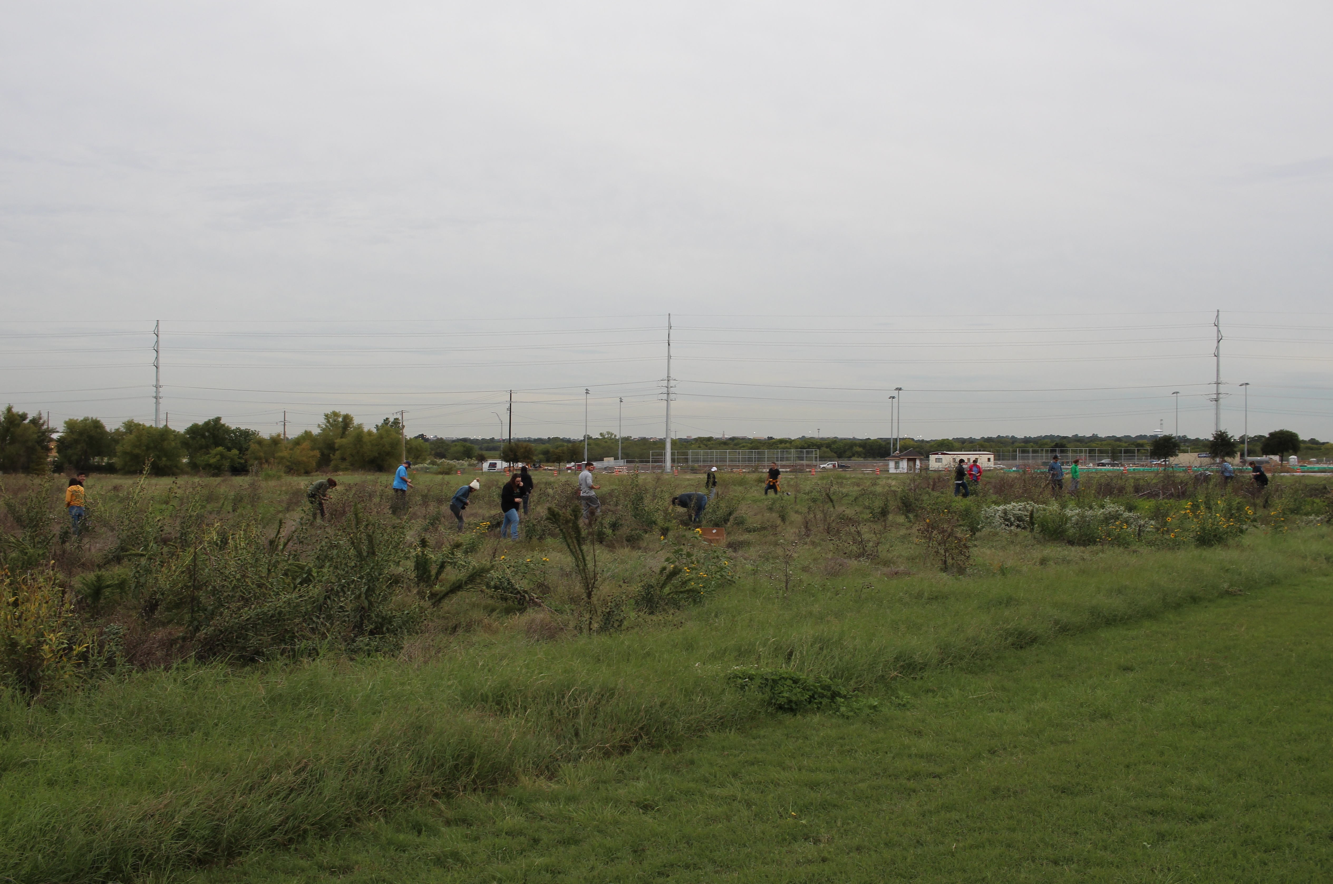 students working in a field of tall grass